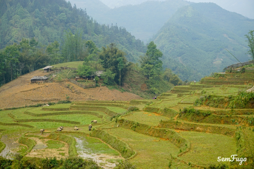 arrozais em sapa