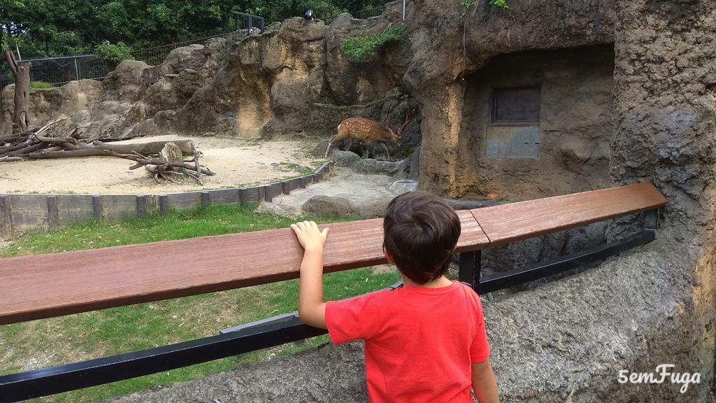 criança a apreciar veado no uno zoo em tóquio