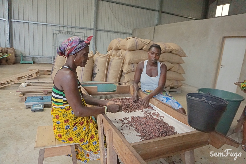 mulheres a selecionarem os grãos de cacau
