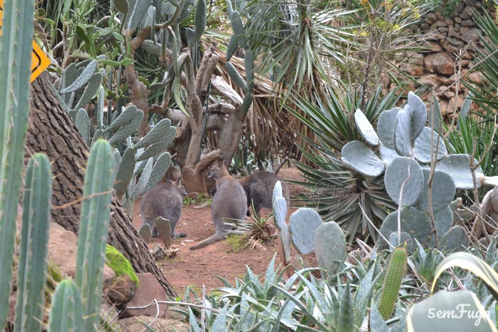 cangurus no zoo de lagos, algarve