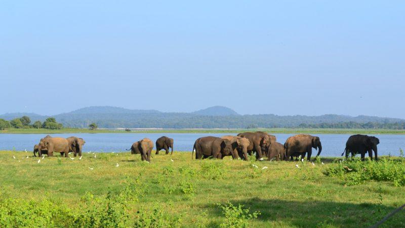 Sri Lanka – 10 motivos para ir