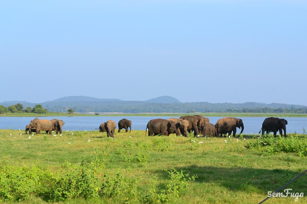 Sri Lanka | 10 motivos para ir