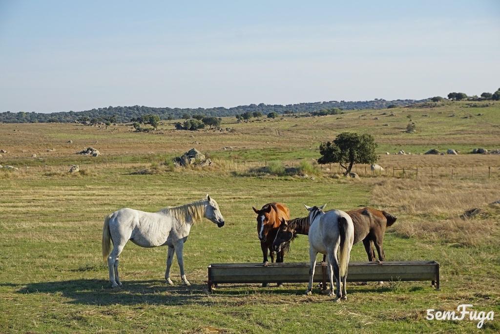 cavalos a caminho da barragem do caia