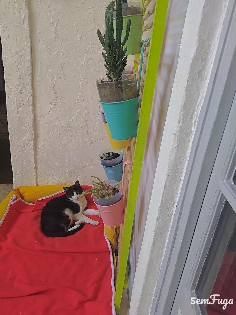 gato no hostel
