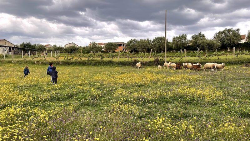 Alvoeira: Escapadinha rural