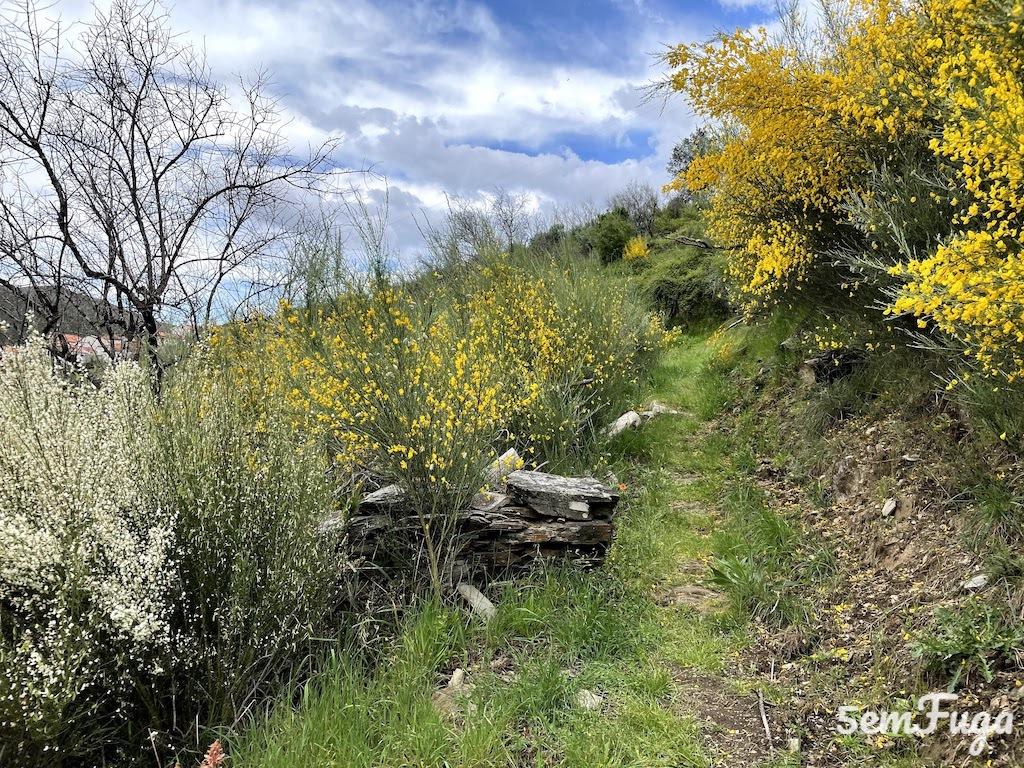 caminho na serra do Açor
