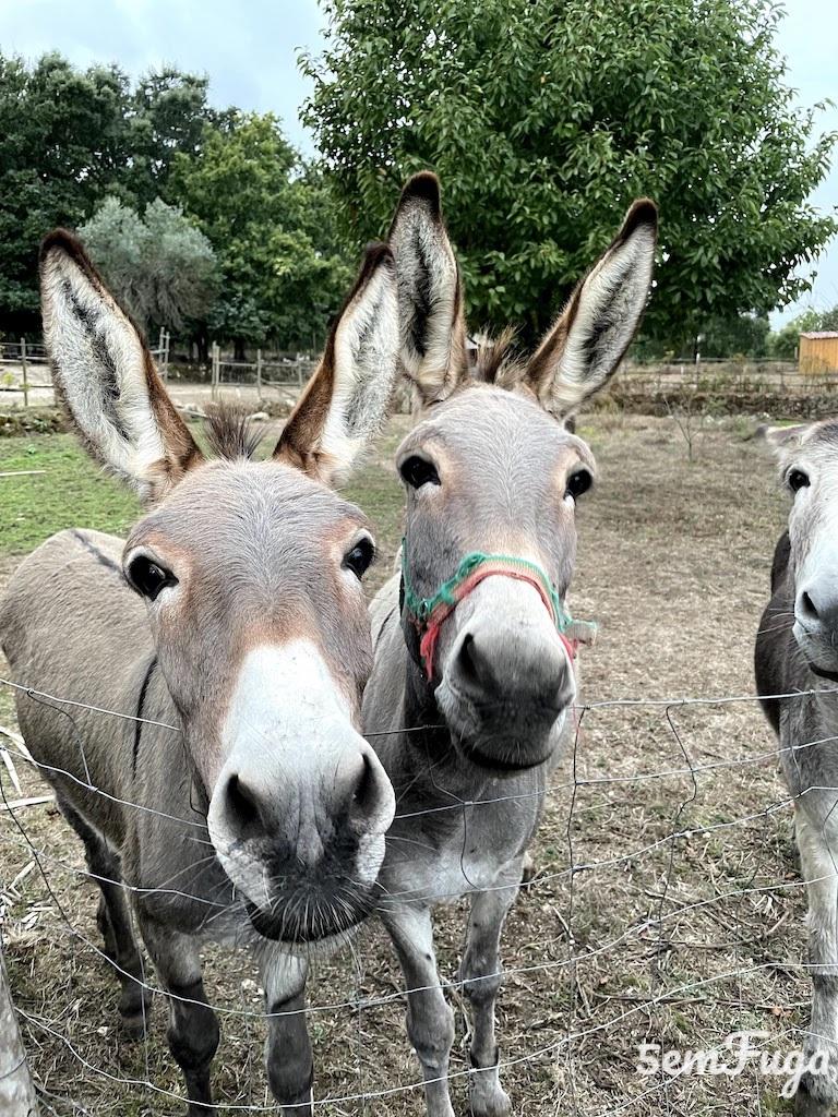 burros no mini-zoo